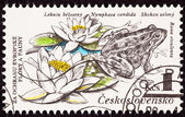 Czechselovakian 切手食用カエル、pelophylax、セイヨウスゲ、キハマスゲ — ストック写真
