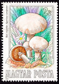 Canceled Hungarian Postage Stamp Meadow Mushroom, Agaricus Campe — Stock Photo