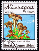 Canceled Nicaragua Postage Stamp Clump Black Chanterelle Mushroo — Stock Photo