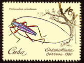 Canceled Cuban Postage Stamp Iridescent Tree Borer Insect Pinthe — Stock Photo