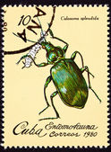 Canceled Cuban Postage Stamp Metallic Green Beetle Calosoma Sple — Stock Photo