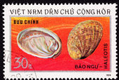 Vietnamese Postage Stamp Empty Abalone Shells Haliotis Mother of — Stock Photo