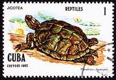 切手, カメ, jicotea, 北系アンティリアン スライダー, trachemy — ストック写真