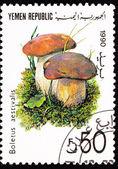 Canceled Yemani Postage Stamp Mushroom Summer Cepe Boletus Retic — Stock Photo