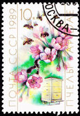 Canceled Soviet Postage Stamp Cherry Blossom Bee Hive Cultivatio — Stock Photo