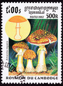 Canceled Cambodian Postage Stamp Fly Agaric mushroom, Amanita Mu — Stock Photo