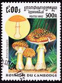 Canceled Cambodian Postage Stamp Fly Agaric mushroom, Amanita Mu — Stock Photo