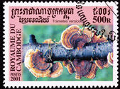Canceled Cambodian Postage Stamp Red Turkey Tail Mushroom, Trame — Stock Photo