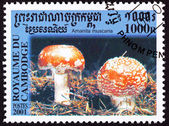 Canceled Cambodian Postage Stamp Toadstool Fly Agaric mushroom, — Stock Photo