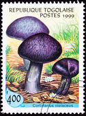 Canceled Togo Postage Stamp Fungus Violet Webcap Mushroom Cortin — Stock Photo