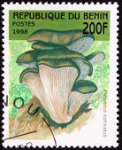 Canceled Benin Postage Stamp Oyster Mushroom, Pleurotus Ostreatu — Stock Photo