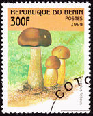 Canceled Benin Postage Stamp Brown Tylopilus Felleus Formerly Bo — Stock Photo