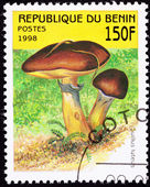 Canceled Benin Postage Stamp Clump Slippery Jack Mushrooms, Suil — Stock Photo