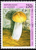 Canceled Guinea Postage Stamp Granular Mushroom — Stock Photo