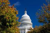 Capitol Building Framed Autumn Foliage Washington DC, Polarized — Stock Photo