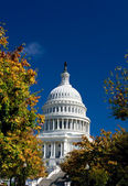 U.S. Capital Building Washington DC Autumn Yellow — Stock Photo