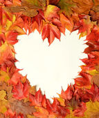 Heart of the leaves — Stock Photo