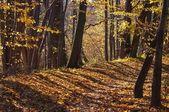 Autumn shadows — Stock Photo