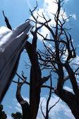 Bone-Tree_1 — Stock Photo