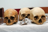 Three Skuls — Stockfoto