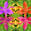 Orchids kaleidoscope - Stock Photo