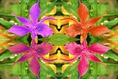 Orchids kaleidoscope — Stock Photo