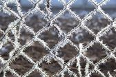 Ice crystals on a netting fence — Stock Photo