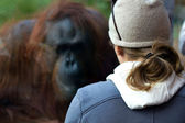 Primate and Human — Stock Photo