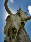 Cattle Skulls — Stock Photo