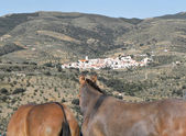 Mules and landscape — Stock Photo