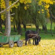 Horse in autumn forest - Stock Photo