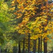 Autumn avenue in park — Stock Photo