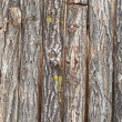 Bark vertical slabs - Stock Photo