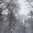 Snowstorm in the park - Stock Photo