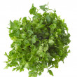 Bunch of parsley — Stock Photo #7795994
