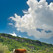 Cows at meadow — Stock Photo #7796149