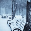 Stock Photo: Benches in winter park