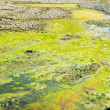Rotten drying swamp - Stock Photo
