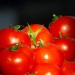 Fresh ripe tomatoes — Stock Photo #7796548