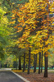 Autumn avenue in park — Stock Photo