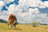 Rear view of a cow — Stock Photo