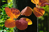 Bright autumn leaves — Stock Photo