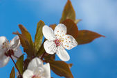 Spring tree flowers — Stock Photo