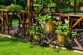 Open air cafe with lots of green plants — Stock Photo