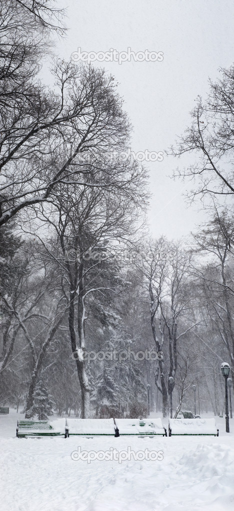Heavy snowstorm in the park. vertical panorama made from 5 images.  Stock Photo #7795945