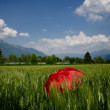 Red umbrella in the wheat field - Lizenzfreies Foto