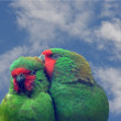 Little lorikeets — Stock Photo