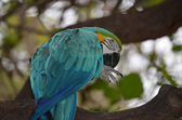 The Macaw — Stock Photo