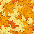 Maple leaves background - Stock Vector