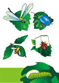 Cartoon insects — Stock Photo